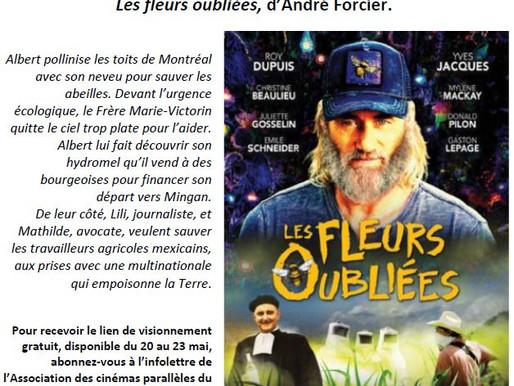 Ciné-club La Branche en ligne – Le film gratuit de la semaine