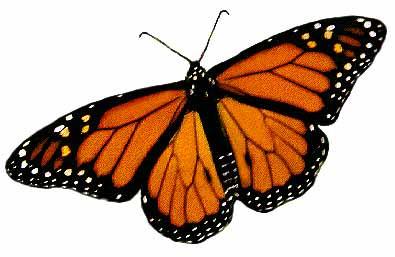 Journées de la culture 2018 - de portes et de papillons