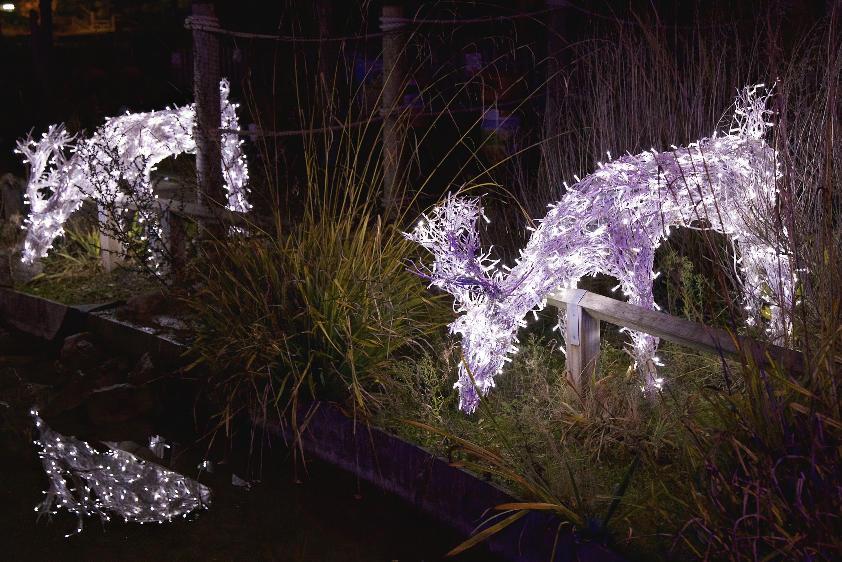 Two Light-Up Reindeers