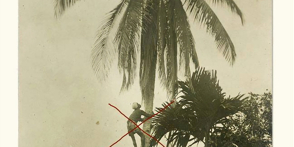 Safe Palm Tree Access Workshop (3.5 ISA CEU Points)