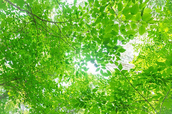 木漏れ日.jpg
