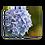 Thumbnail: Blue Hydrangea Canvas