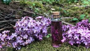 Simple, Magical Lilac Syrup Recipe