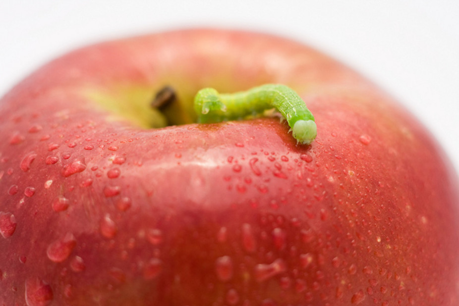 Apple. flickr/Andy Langager, CC BY-NC