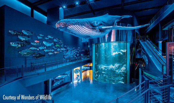 The Great Barrier Reef Tank in the Great Ocean's Hall at Wonders of Wildlife