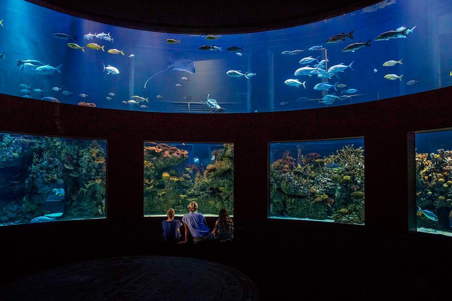 Wonders of Wildlife—Great Oceans Hall