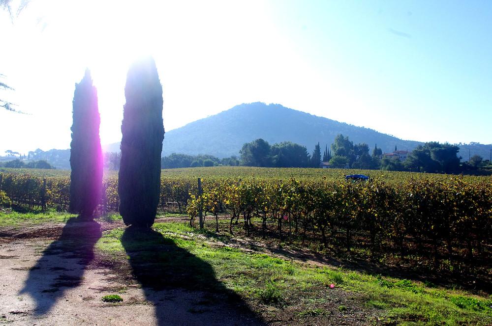 paysage clos cibonne