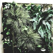 akoestiek en planten