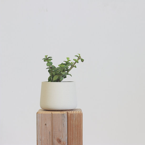 earthenware+glass planter