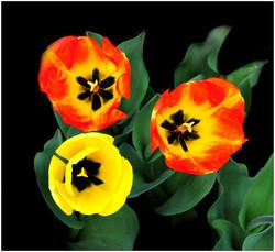 2 Orange 1 Yellow