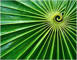 Fan Leaf.jpg