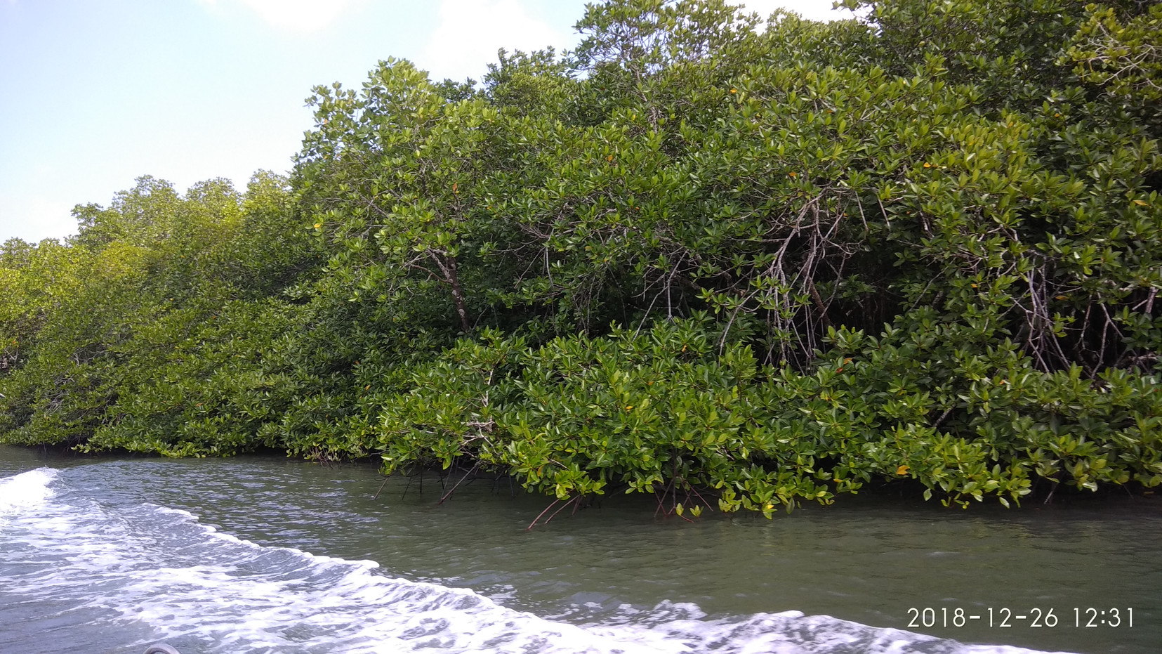 WAY LIME STONE CAVE MANGROVE EXCURSION