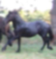IncaAug2003.jpg