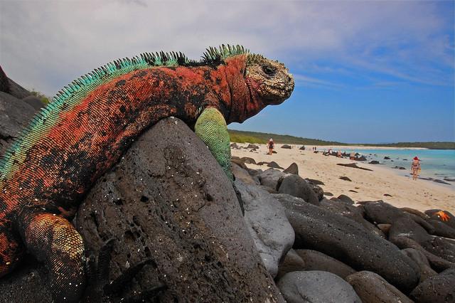 Iguanas en Islas Galapagos, Ecuador