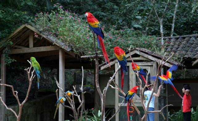 Parque Guacamayas