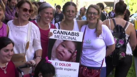 Encontradas reacciones provoca la aprobación de la marihuana con uso medicinal en Argentina (video)