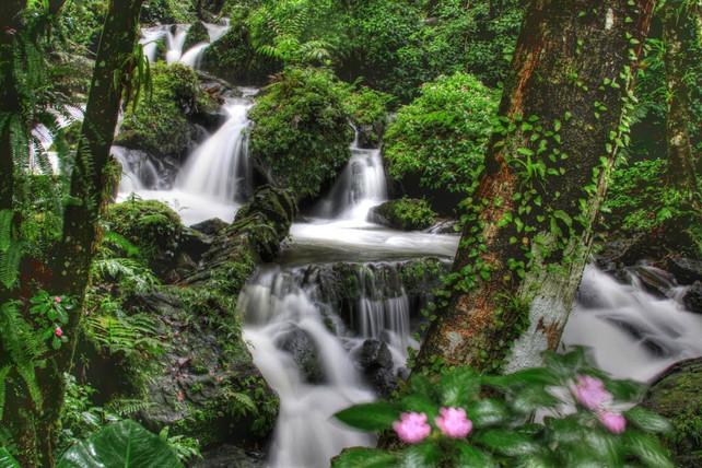 El Parque Nacional El Yunque, la casa del Coquí