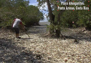 Cientos de miles de peces muertos aparecen en las costas del Golfo de Nicoya, en Costa Rica (video