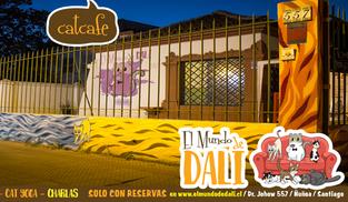 """""""El Mundo de Dalí, Café-Gato"""", un refugio para gatos en Chile que esta dando mucho de que"""
