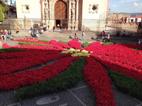 Las hermosas flores de Pascua, o Poinsetias, son un gran negocio para México  (video)