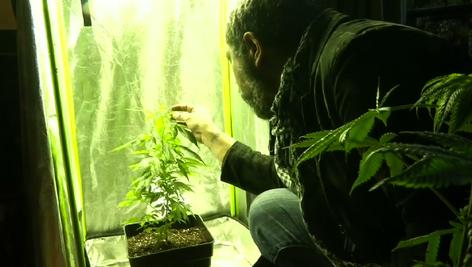 Seminarios de auto cultivo de marihuana medicinal, la solución para pacientes en Chile (video)