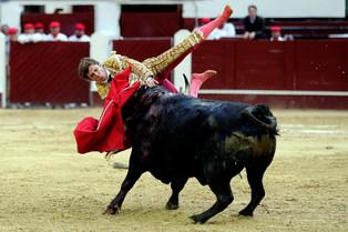 Torero español recibió cornada en un muslo al cierre de la temporada taurina de Bogotá (video)