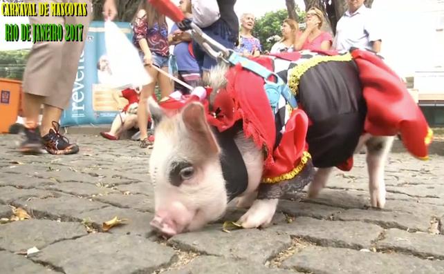 """En Rio de Janeiro hoy el """"Carnaval fue Animal"""", y las mascotas lucieron sus mejores galas"""