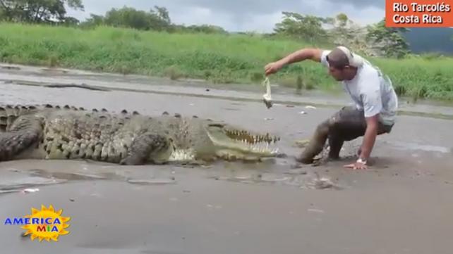 Guía turístico casi devorado por cocodrilo en Costa Rica (video)