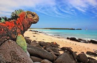 Destinos America Mia de la Semana: Las Islas Galápagos en Ecuador (video)