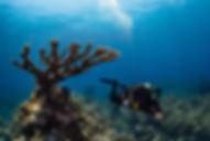 OceanAkumal2.jpg