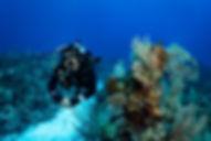 OceanAkumal4.jpg