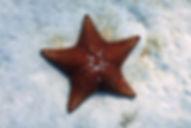 OceanTulum2.jpg