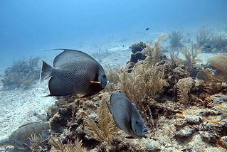 OceanTulum3.jpg