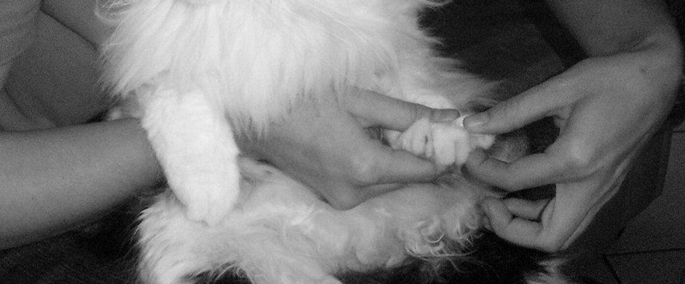 Ostéopathe pour animaux LEONCINI Amandine