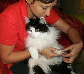 Ostéopathe félin LEONCINI Amandine : Manipulation des phalanges chez un chat
