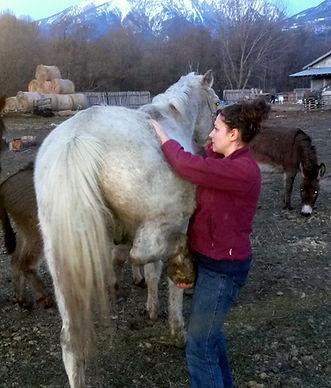 Ostéopathe équin LEONCINI Amandine :Testing du bassin chez un cheval