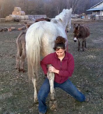 Ostéopathe équin LEONCINI Amandine Testing du tarse chez un cheval