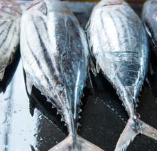 Peixes inteiros