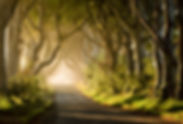 Magical-Morning-at-the-Dark-Hedges-1.jpg