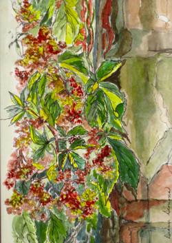 lady bird's berries