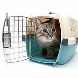 cat-carrier-training-1.jpeg