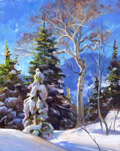 Snow Coated Alpine