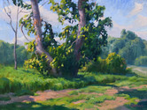Spring Cottonwood