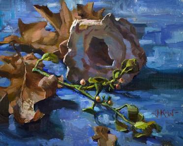 Pacific Mistletoe