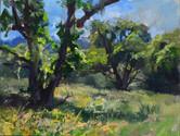 Early Summer Oaks