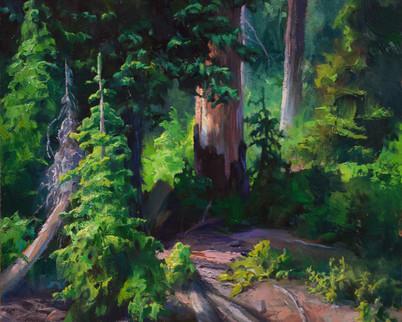 Conifer Layers