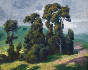 California Eucalyptus