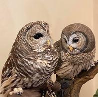 al's owls.jpg