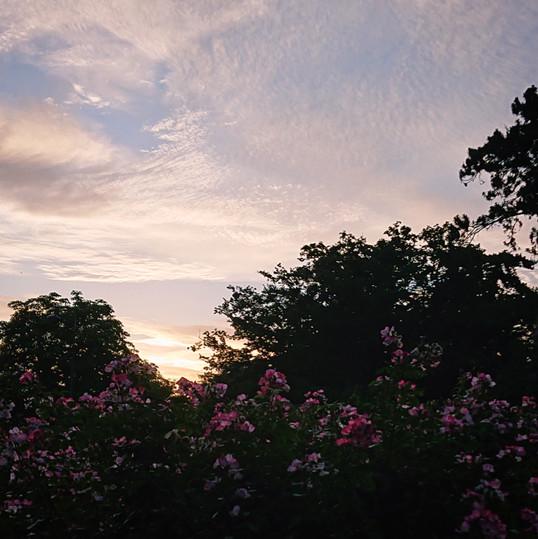 Flowers & Sunrise