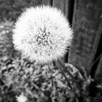 Blow and make a wish